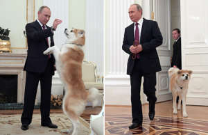 Russian President Vladimir Putin plays with his dog Yume, a female Akita Inu, before giving an interview to Japanese Nippon Television and Yomiuri newspaper at the Kremlin in Moscow, Russia, December 7, 2016. Picture taken December 7, 2016. Sputnik/Kremlin/Alexei Druzhinin via REUTERS ATTENTION EDITORS - THIS IMAGE WAS PROVIDED BY A THIRD PARTY. EDITORIAL USE ONLY. TPX IMAGES OF THE DAY; MOSCOW, RUSSIA - DECEMBER 13, 2016: Russia's President Vladimir Putin with his Akita dog named Yume before giving an interview to Nippon Television Network Corporation (Nippon TV) and the Yomiuri Shimbun newspaper, at the Moscow Kremlin. Putin is to visit Japan on December 15-16, 2016. Alexei Druzhinin/Russian Presidential Press and Information Office/TASS (Photo by Alexei Druzhinin\TASS via Getty Images)