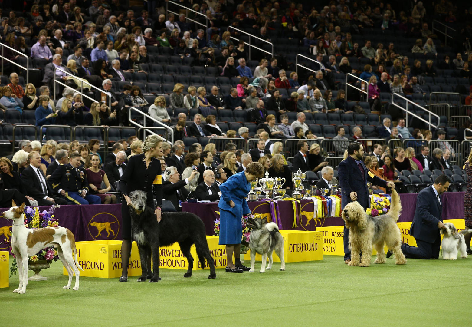 Best In Show Past Winners Of The Westminster Dog Show
