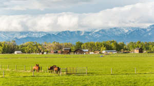 horse rural farm with mountains and clouds in Montana