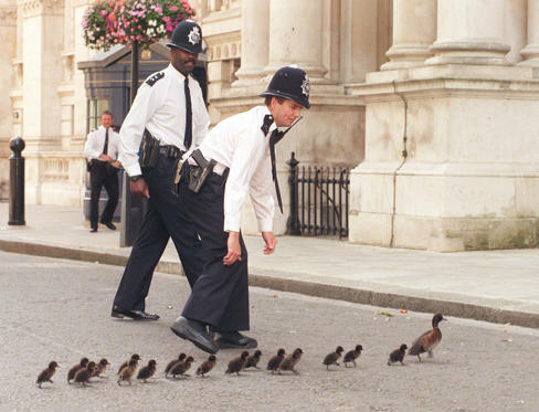 Diapositiva 1 de 33: Police officers on duty in Downing Street, run to take care of a mother duck taking her family on a shortcut from St James's Park. The ducks were eventually rounded up and taken back to the park. (Photo by Ben Curtis - PA Images/PA Images via Getty Images)