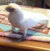 Bird dances hip-hop like a pro