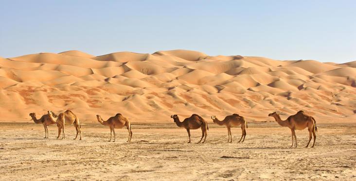 Diapositive 25 sur 28: O maior deserto de areia contínua do mundo tem um dos climas mais quentes e seco, com temperaturas de até 56,1º C.