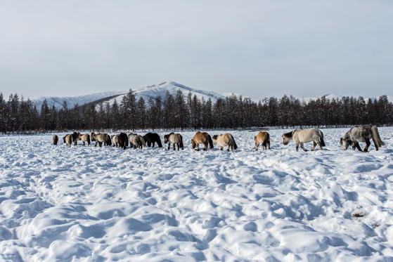 Diapositive 4 sur 28: É o lugar mais frio habitado da Terra e também bateu o recorde de localização mais fria do mundo, com registros no termômetros perto dos -67 °C.