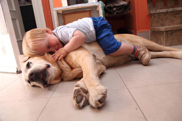 Diapositiva 3 de 51: One and a half years old baby embraces a dog.