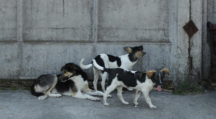 File photo: Stray dogs lounge outside a cafeteria