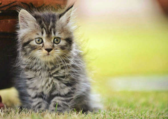 幻灯片 60 - 1: Cute Kitten Sitting On Grassy Field