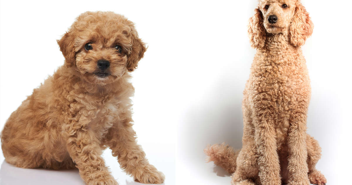 In Photos Dog Breeds As Puppies And Adults