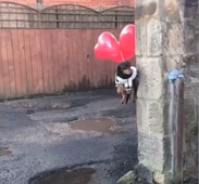 Dog floats like the house in 'Up!'