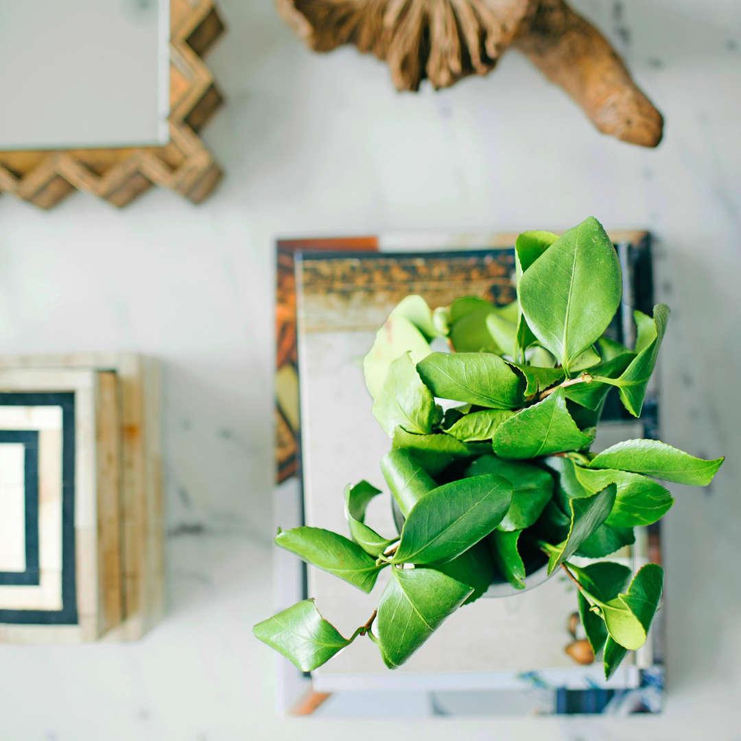 10 Houseplants That Will Actually Help You Sleep