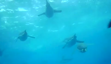 Penguin cam captures diving from a bird's eye view