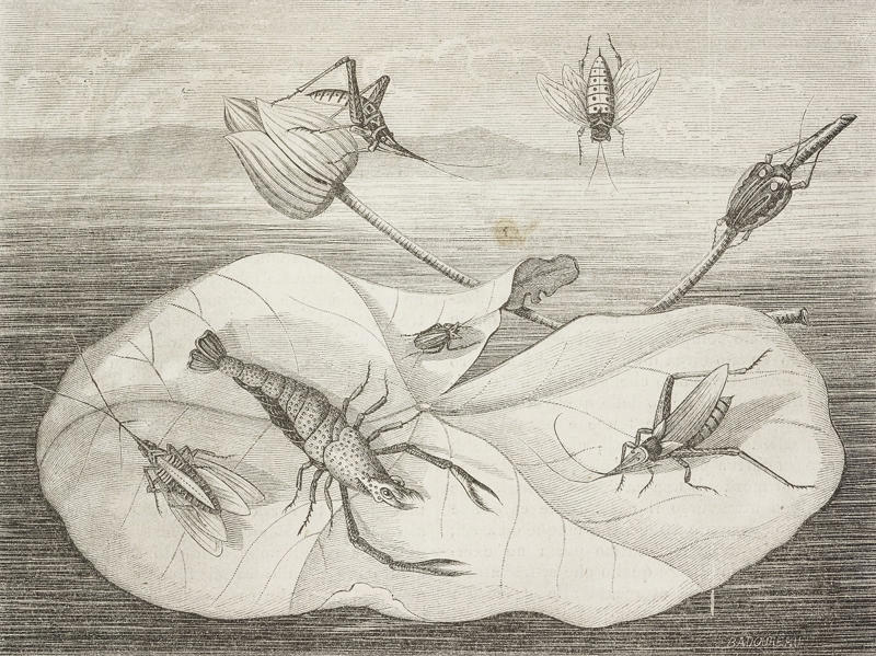 Crustaceans, insects and larvae