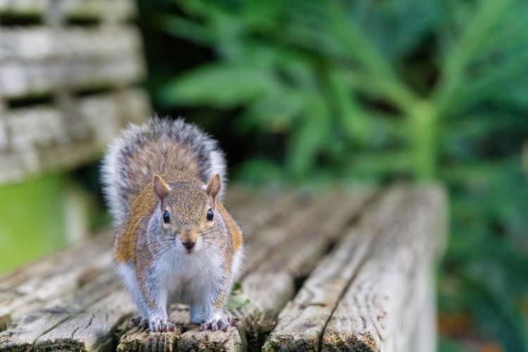 15 Trucs Simples Pour Eloigner Les Ecureuils
