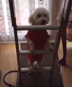 Dog doesn't know how to use stairs