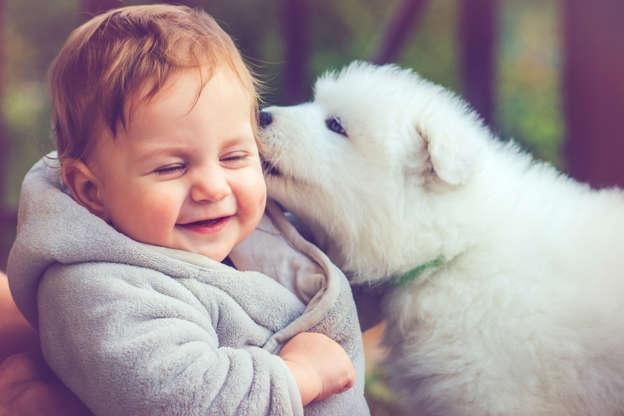 幻灯片 28 - 1: Child with samoyed puppy Happy boy with little puppy