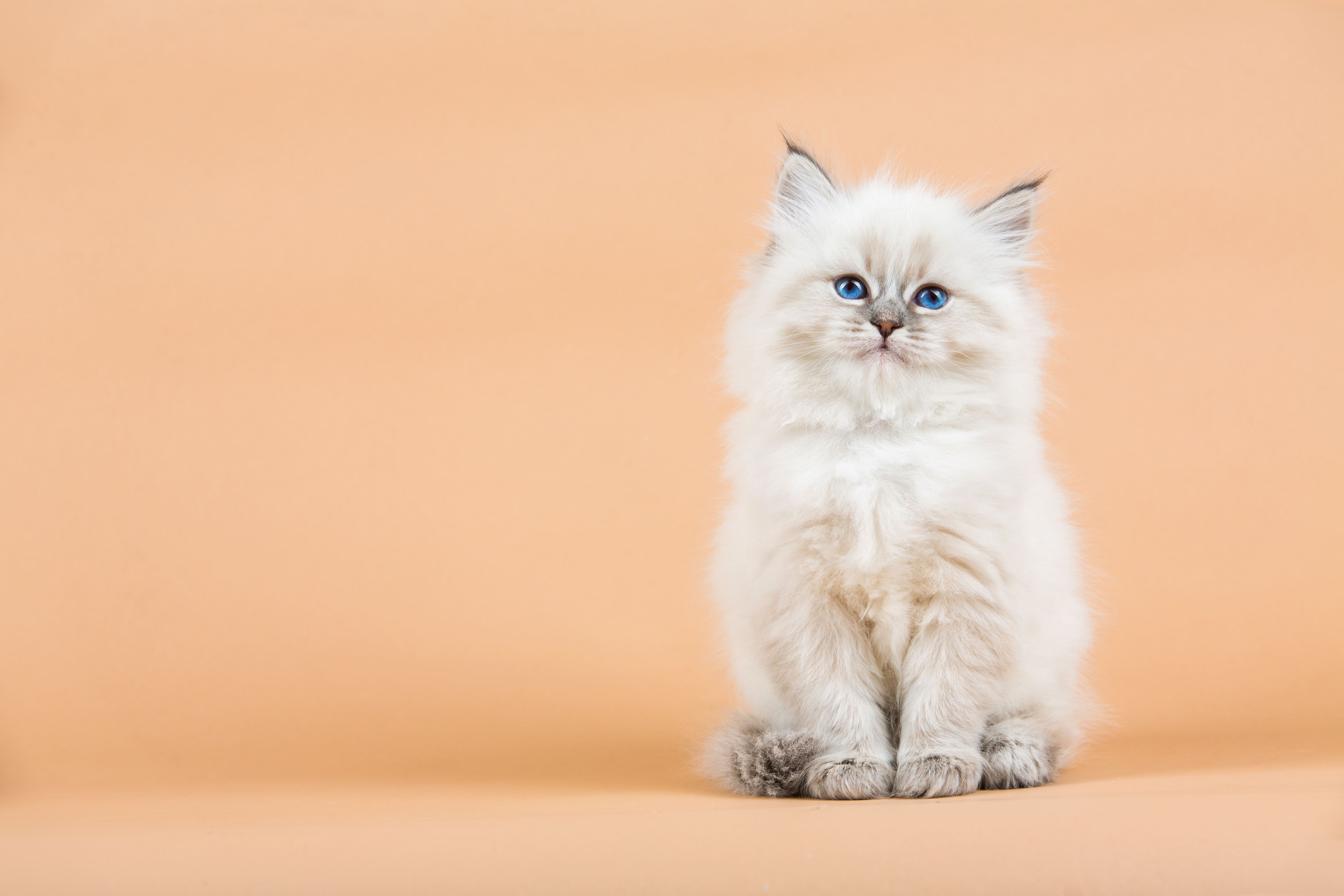 50 noms de chats juste parfaits!