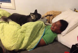 Husky won't let mom wake up son for school