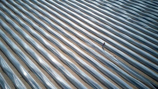 幻灯片 36 - 1: A picture taken with a drone shows an aerial view of an asparagus farm in Beelitz, a town in Brandenburg, Germany, 12 April 2018. Asparagus season officially starts in Beelitz.