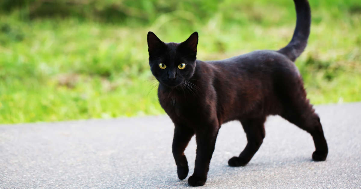 18 superstitions and their origins