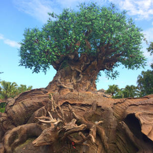 a group of giraffe standing next to a tree: 10 Things You Should ALWAYS Bring to Disney World