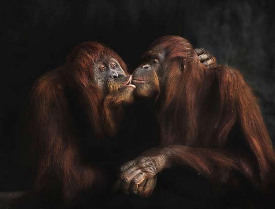 dyr krydser dating dyr