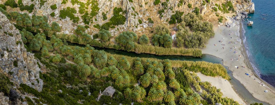 Διαφάνεια 35 από 35: The forest of palms, Riverside palm-groves at Preveli Beach, River Megalopotamos (Kourtaliotis), Preveli Gorge, Crete, Greece