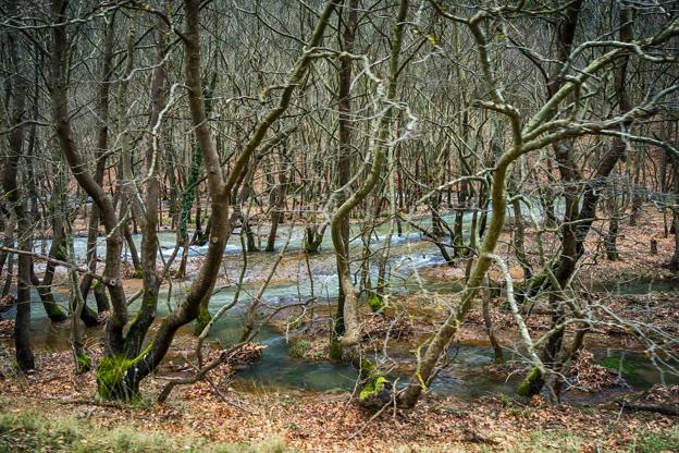 Διαφάνεια 22 από 35: Thick leafless forest with stream running down in winter, in Kalavryta Greece.