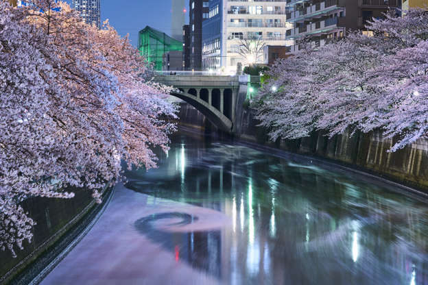 24 枚のスライドの 15 枚目: Cherry Blossoms line up the Meguro River at the height of spring.