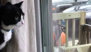 a cat sitting in front of a window