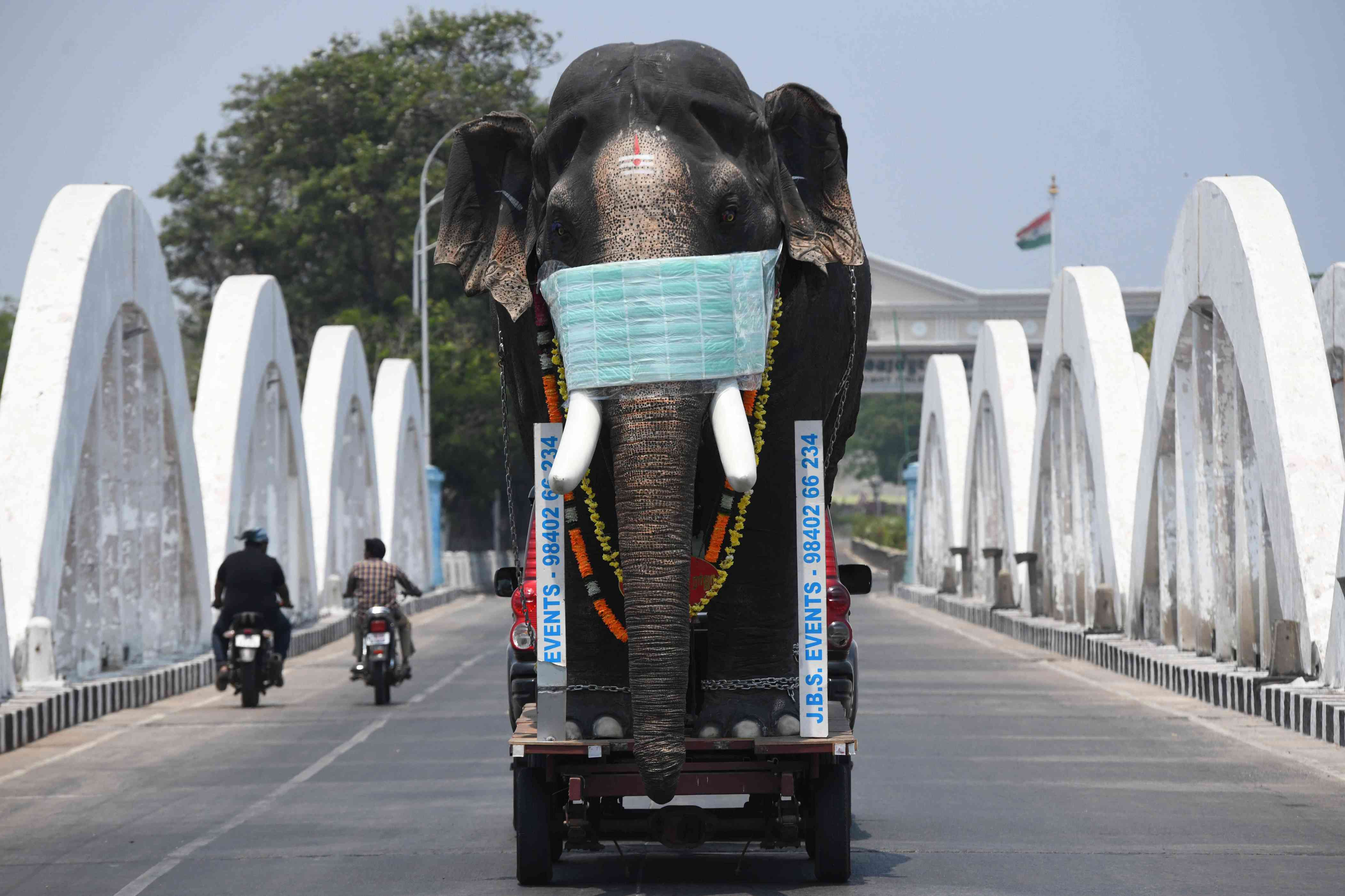 Slide 17 of 113: A replica of an elephant with a face mask is driven on trailer pulled by a car to bring awareness during a one-day Janata (civil) curfew imposed by the government amid concerns over the spread of the COVID-19 novel coronavirus in Chennai on March 22, 2020.