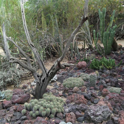Slide 3 of 13: This desert scene is from Moorten Botanical Garden, an iconic Palm Springs destination for exploring the area's unique flora and fauna. Several varieties of cacti offer a fun twist on the classic rock garden.
