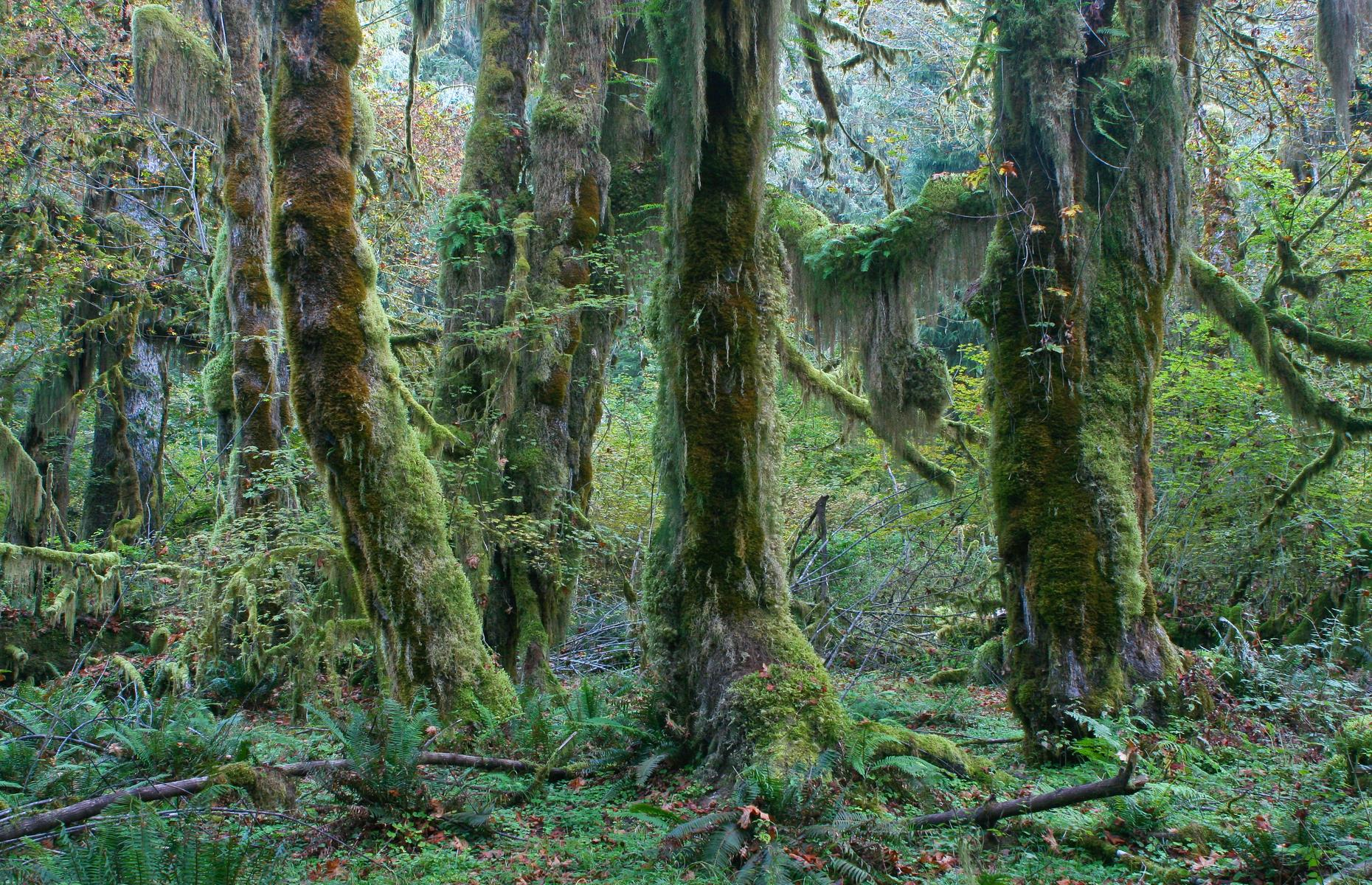 Slide 48 of 51: Olympic National Park carpets several counties with its green gorgeousness, but Jefferson County is home to one of the park's most surprising and awe-inspiring sights: the Hoh Rain Forest. This temperate rainforest is where centuries-old hemlock trees are dressed in thick, velvety moss. It's the stuff of fairy tales, as is pretty much every inch of this county, from waterfalls to shorelines laced with marshes and sandy coves. Check out more of the most magical places on Earth.