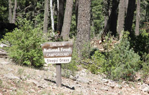 a sign on a wooden bench sitting in the middle of a forest: The sign for Sleepy Grass Campground on the Lincoln National Forest
