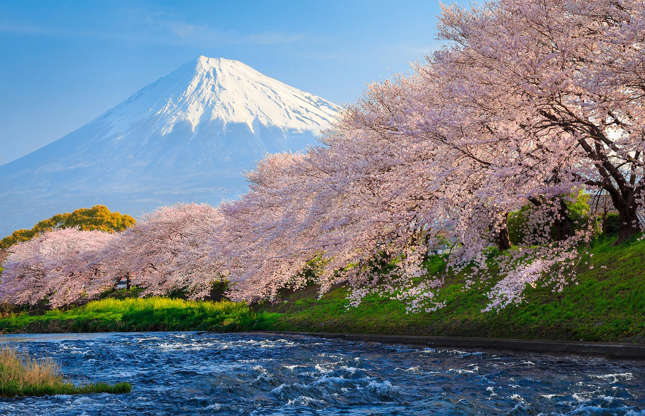 Slide 5 of 41: Each year the arrival of spring means Japan's wealth of cherry-blossom trees reveal their blooms to the world and the age-old tradition of hanami (cherry-blossom viewing) can commence. On Japan's subtropical island of Okinawa the sakura can bloom as early as January, while the northernmost island Hokkaido can see its blooming as late as May. In central cities, such as Tokyo, Kyoto and Osaka, the season typically takes place in April.