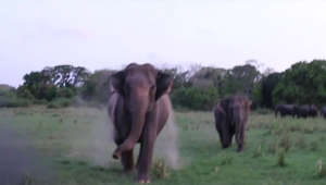 a herd of elephants walking across a grass covered field