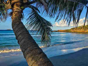 a palm tree on a beach near a body of water: Culebra, Puerto Rico (Photo by Douglas Hodgkins/EyeEm/Getty)