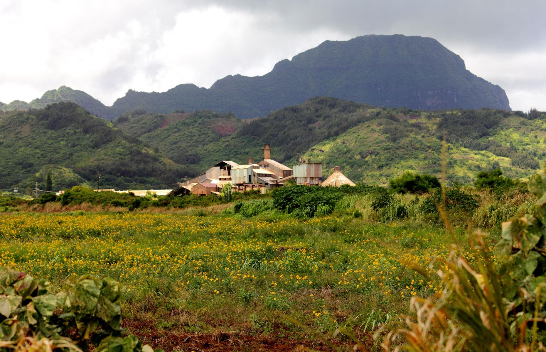 Slide 22 of 101: A blight on the tropical landscape for some and a key piece of Hawaiian history for others, the Old Sugar Mill of Kōloa was Hawaii's first commercially viable sugar cane plantation. The mill was established in 1835 and thrived throughout the 19th century.