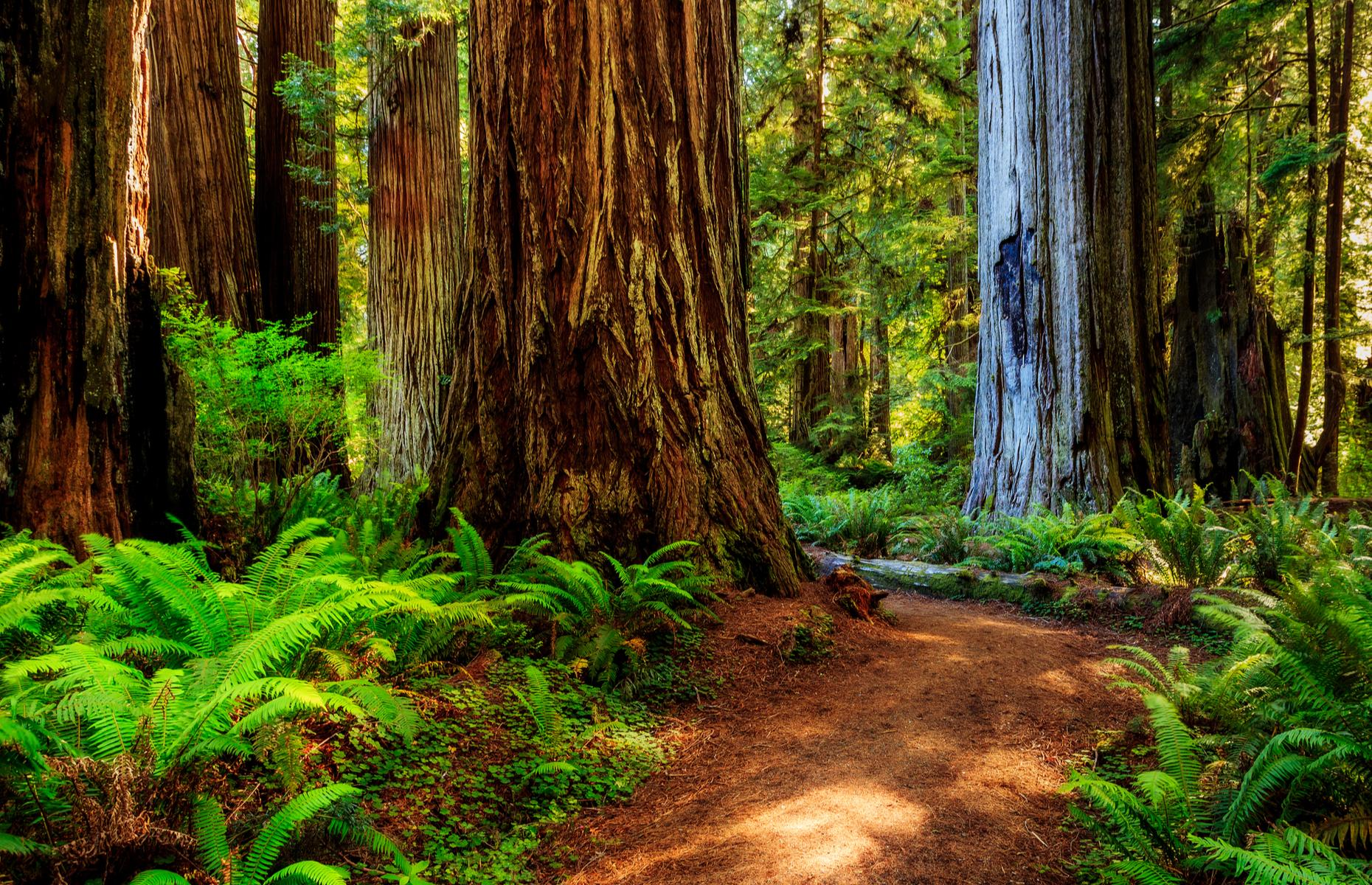 Slide 4 of 27: Spread out along the coast of northern California, the Redwood National and State Parks are made up of protected forests that house some of the world's giants. Here, awesome old-growth redwood trees tower above visitors, many of them hundreds or even thousands of years old.