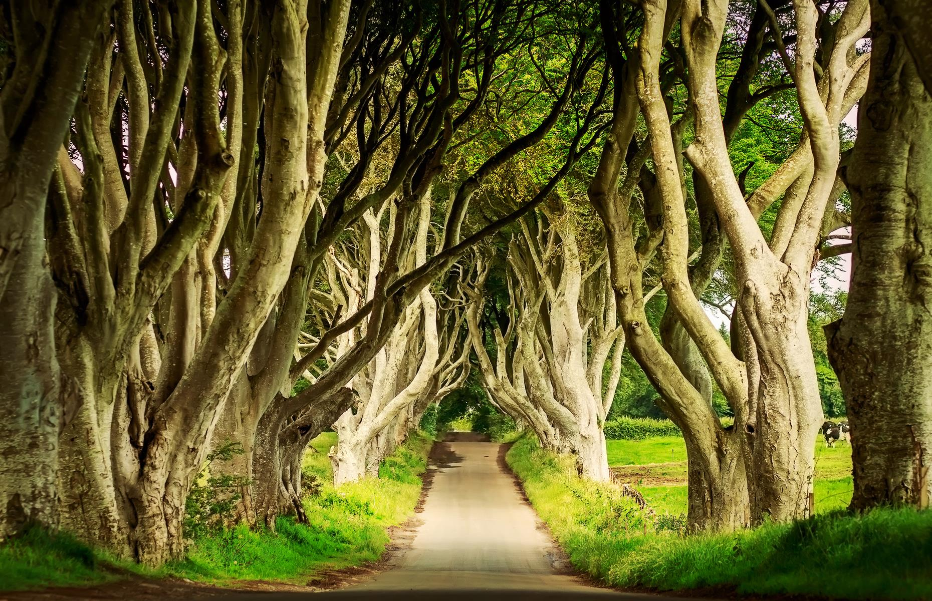 Slide 16 of 27: Chances are, if you're an avid Game of Thrones fan, you might recognize Northern Ireland's Gothic-looking Dark Hedges, located in County Antrim. It features as the Kingsroad in the much-loved TV show and has been attracting devotees of the series ever since.