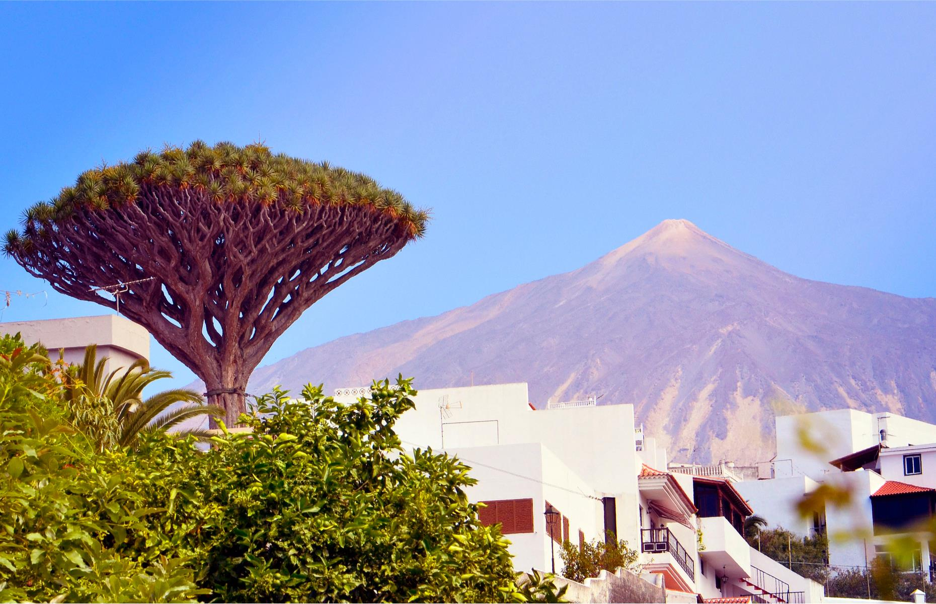 Slide 21 of 27: In spite of a warm and humid climate, Tenerife is a luscious and fertile island and the presence of dragon trees is testament to this. These spectacular subtropical trees can be found across the Canaries, but they've become a symbol of Tenerife.