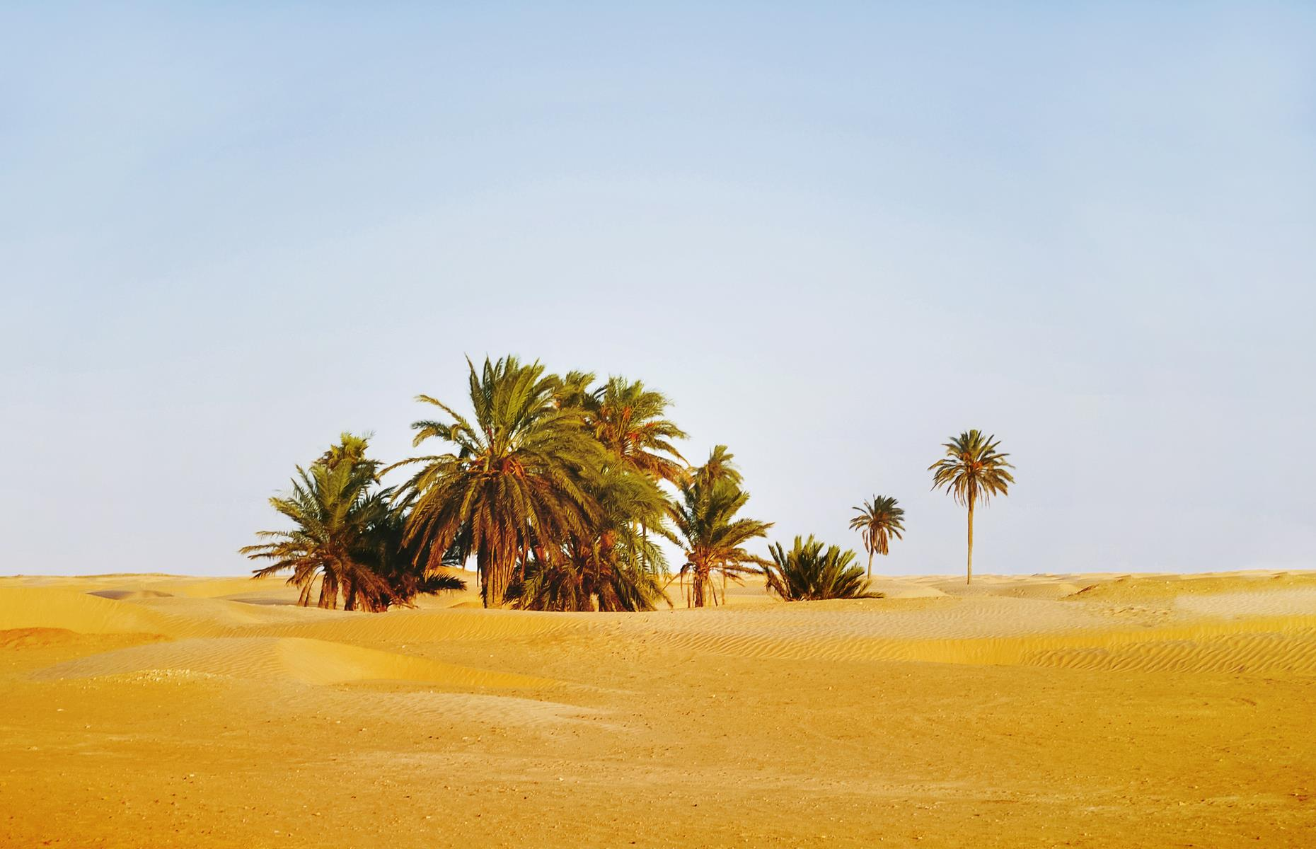 Slide 30 of 37: If the current weather conditions continue, the Sahara, which covers large areas of Algeria, Egypt, Chad, Mali, Libya, Mauritania, Morocco, Niger, Western Sahara, Tunisia and Sudan, could expand even further.Theseincredible tourist attractionsdon't look like they used to.