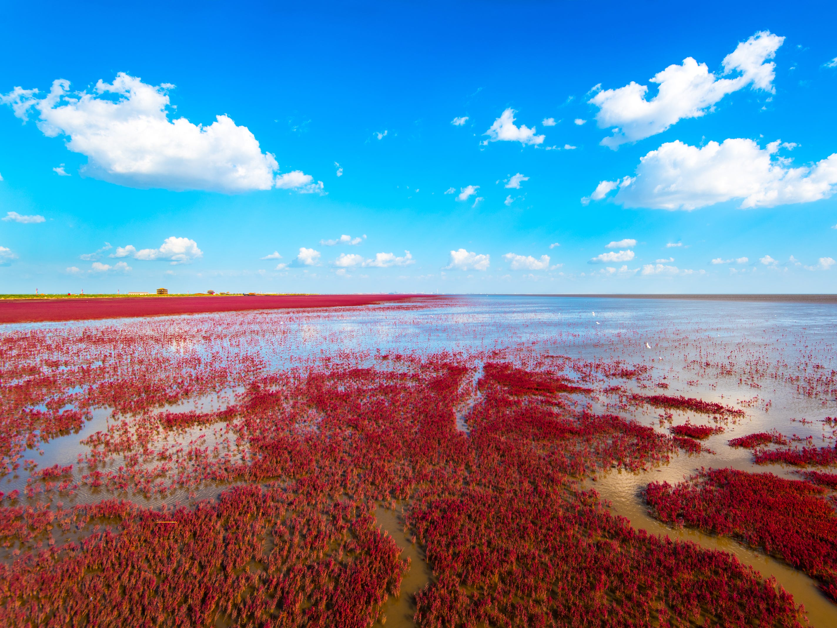 """Slide 13 of 51: The Red Beach gets its distinct crimson color from an abundance of """"red weed"""" called Chenopodium that thrives in alkaline soil. The area is also known as home to one of the rarest cranes in the world – the red crowned crane."""