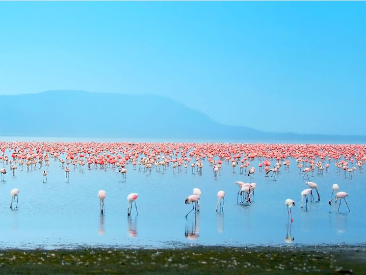 Slide 26 of 51: Gorgeous Lake Nakaru sits in a national park famous for its epic bird-watching — especially its bright pink flamingos. The large, shallow lake is surrounded by marshes and grassland, and also home to rhinos, hippos, waterbucks, and buffalo.