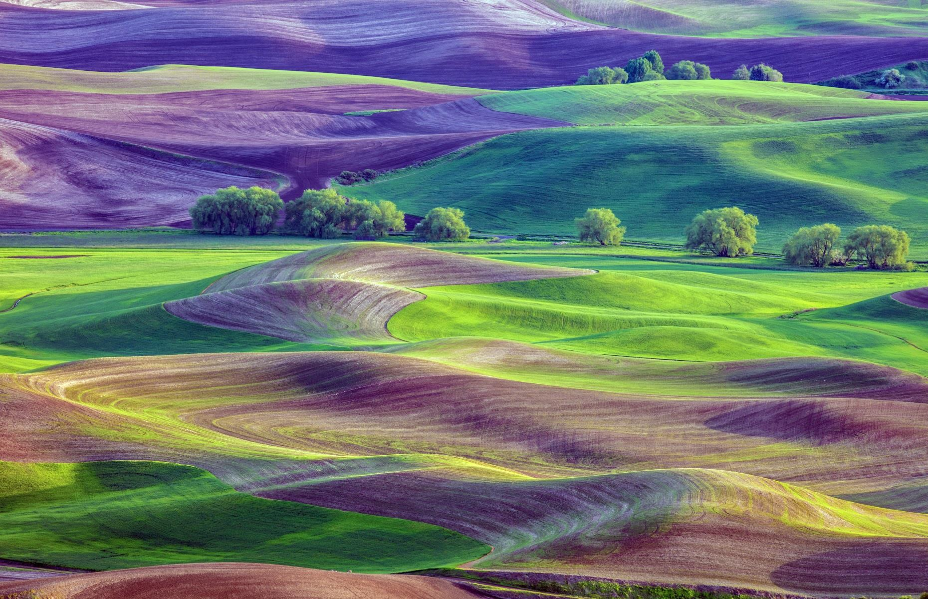 Slide 40 of 59: Despite being one of America's most attractive regions, the Palouse often slips under the radar. This major agricultural area, which also encompasses parts of Idaho, is known for picture-perfect pastoral fields that shimmer in shades of purple and green. These idyllic hills were formed over tens of thousands of years, from wind-blown dust and silt from dryer climes.