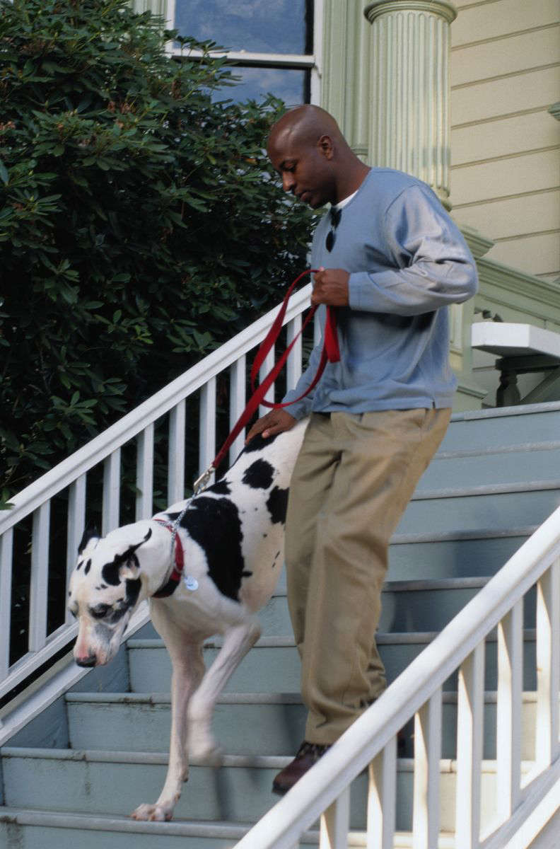 a dog standing next to a fence: Man Walking His Pet Dog Down the Stairs