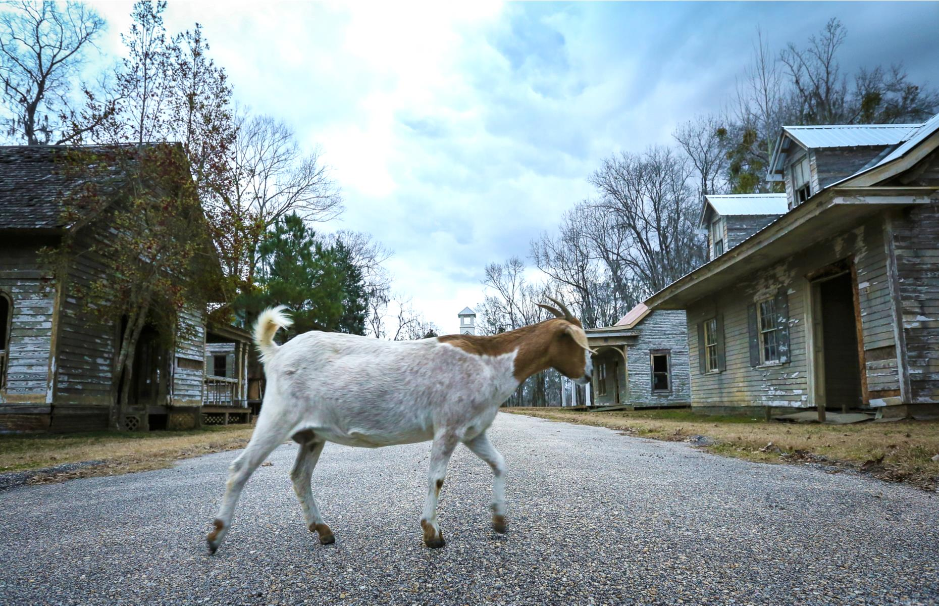 """Slide 9 of 64: Once filming was finished the movie set was left behind, and today rickety houses sit among the woodland, which includes a pair of styrofoam trees that were part of the film's own """"enchanted forest"""". You'll also see free-roaming goats – the town's only residents – wandering about the place."""