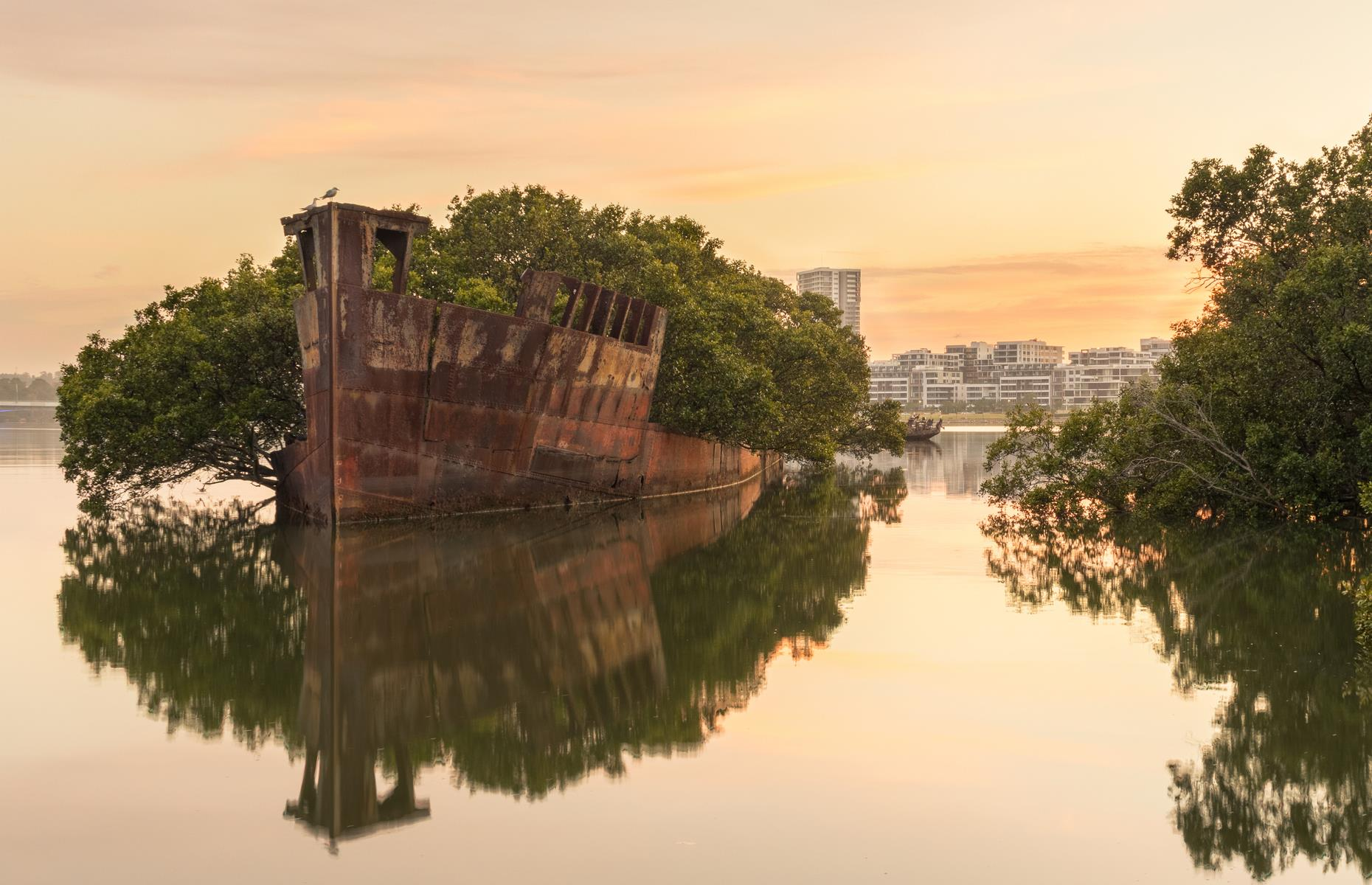 "Slide 22 of 64: Often dubbed a ""floating forest"", the shipwreck of SS Ayrfield in Sydney's Homebush Bay is so overgrown with mangrove trees that only its bow is visible. The area was once a busy port and trading boats would frequently pass through the waters here, carrying war supplies and other freight. But when trading slowed after the Second World War, many ships were decommissioned and simply left in the bay."