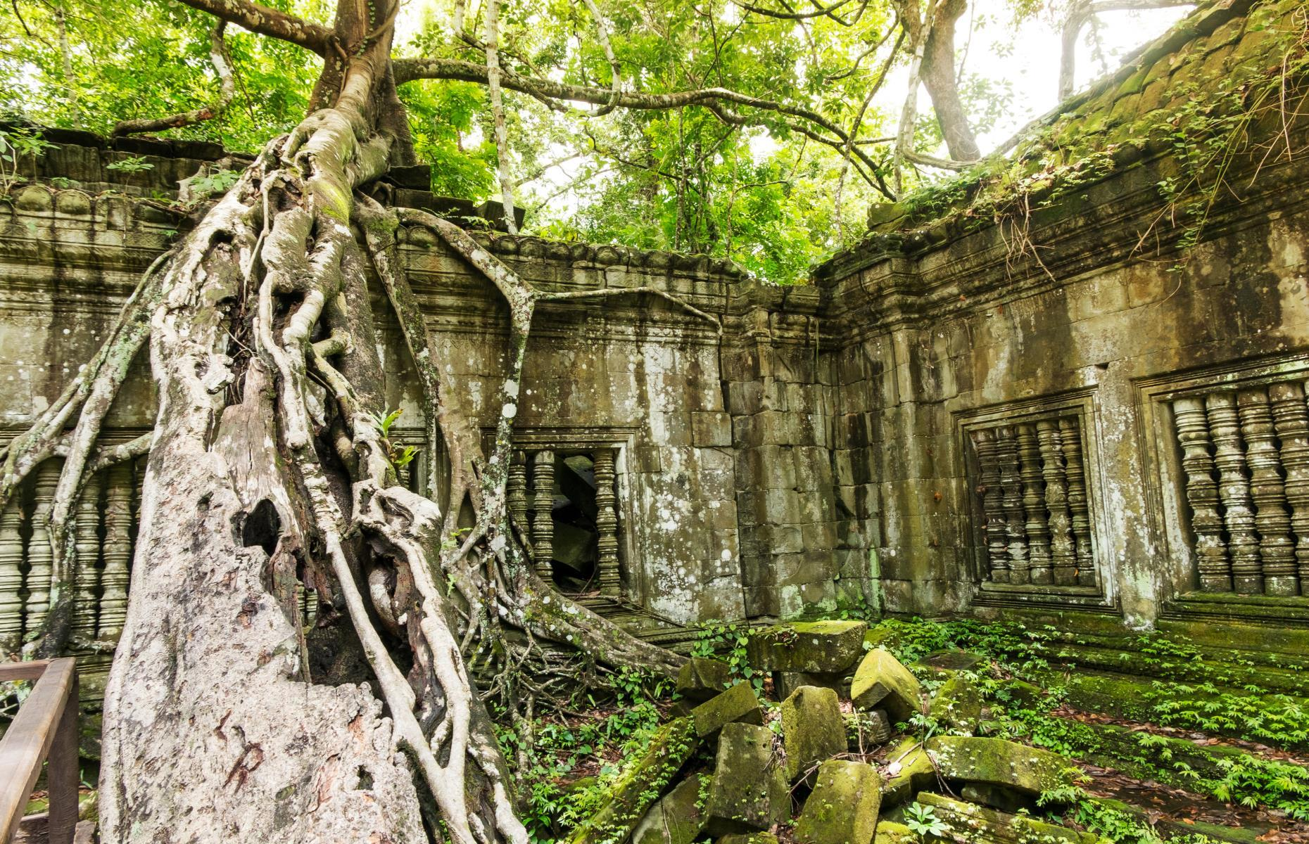 Slide 48 of 64: Nature has run riot in many of Cambodia's other jungle ruins, including the large and enigmatic temple of Beng Mealea that has been dramatically devoured by the surrounding forest. Clambering around these remote and overgrown ruins, where crumbling blocks are covered in lush vegetation and seemingly suffocated by strangler figs, is a reminder of the force and endurance of nature.