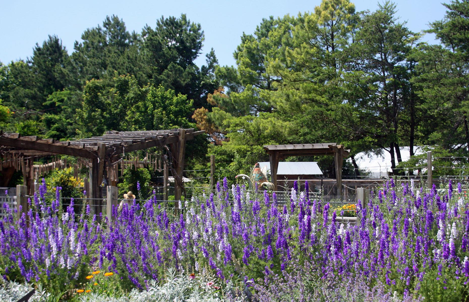 Slide 9 of 101: In Fayetteville, a highlight is the Botanical Garden of the Ozarks (pictured), which includes a beautiful space dedicated to Arkansas' native flora (the garden itself is open, though some amenities like the gift shop remain closed). Then, the hairpin bends and woodland scenery of the Pig Trail Scenic Byway (particularly beautiful when ablaze in fall) await. The route finishes in Ozark: this dinky town, filled with street art and antiques stores, is a base for forest hikes and kayaking on the Mulberry River.