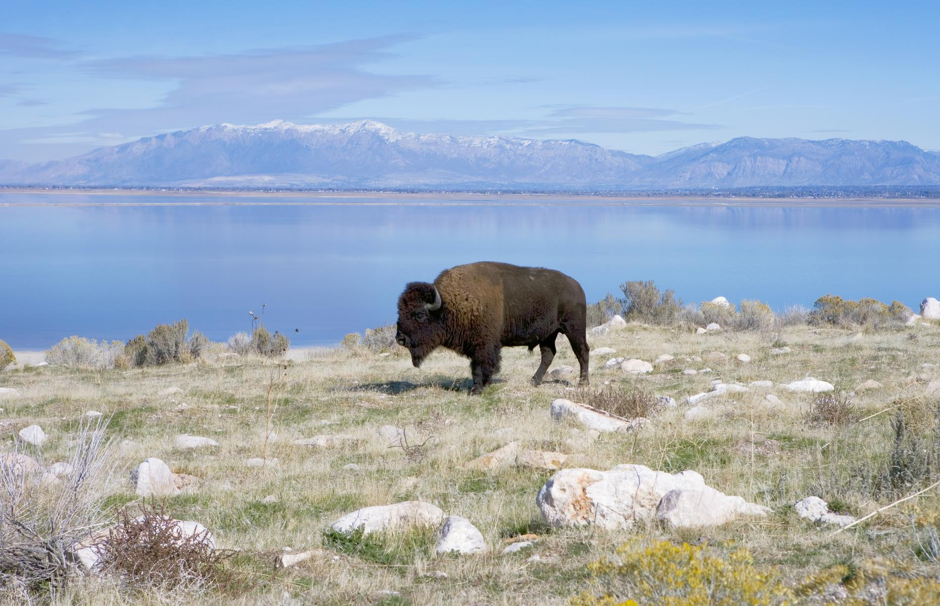 Slide 89 of 101: Picturesque detours include Antelope Island with its roaming bison and stunning views. Then back on the road, on the approach to Wendover, the landscape is lunar, with more stark salt pans and lakes. The city itself sits right on the border with Nevada and is a good base for the Danger and Jukebox Caves State Park Heritage Area, an area of rich archaeological history. Cave tours here are currently suspended, but check the website for updates.