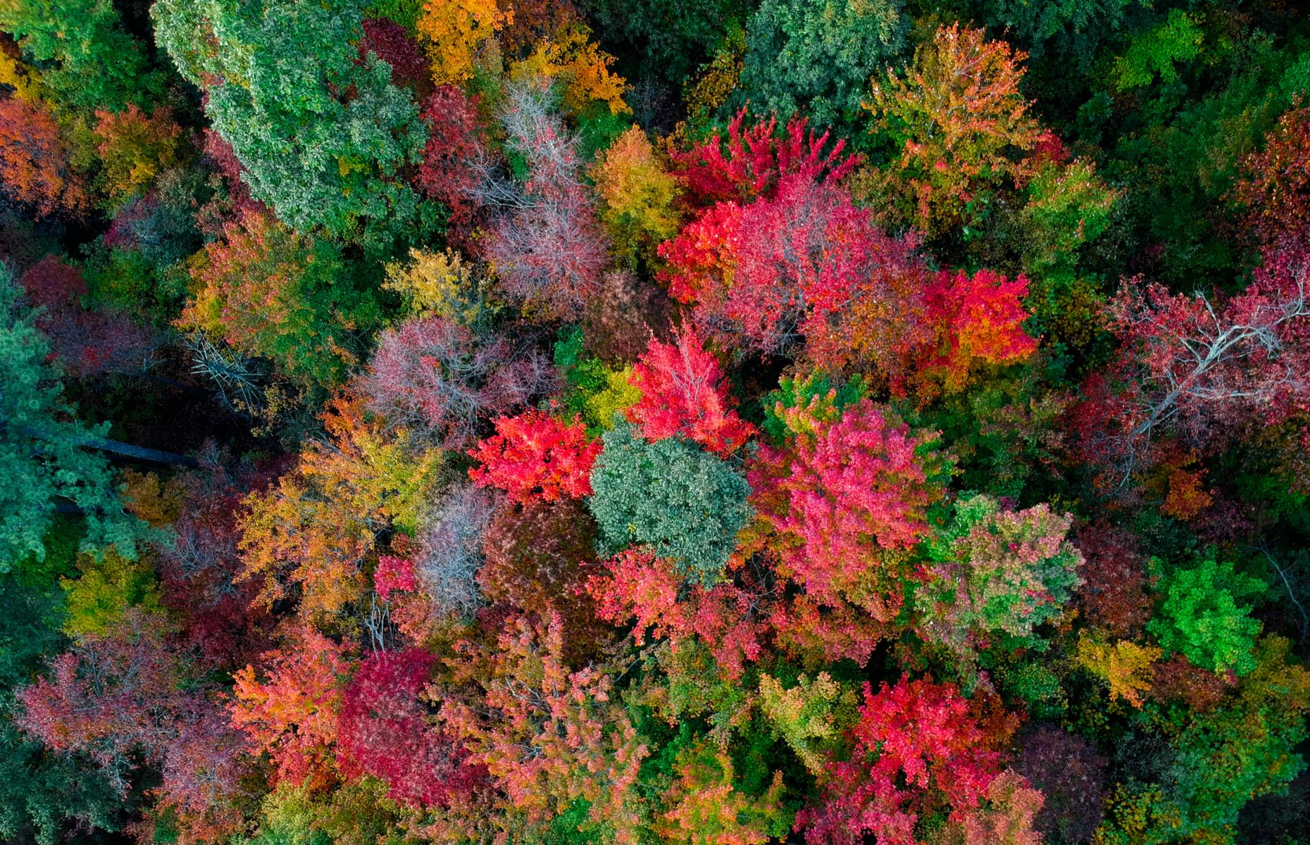 Slide 29 of 43: Captured with a drone, this sea of trees carpets the Appalachian Mountains near Asheville, North Carolina. Rivaling the displays put on by forests in New England, the leaves here explode in a riot of crimson, ocher, tan and russet come fall. Read on to discover the world's most wonderful views.